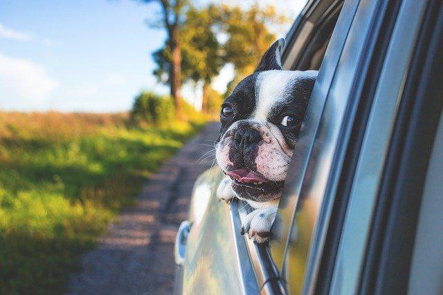 Autokino so psom